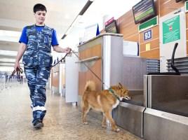 "alt=""Aeroflot perros Sulimov"""