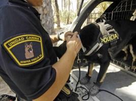 """alt=""""perro Policía Local Elche"""""""
