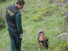 Perro detector restos de un oso