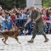 Exhibiciones caninas en el Día de las Fuerzas Armadas