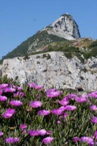 Flores adornando la vista del Peñón de Gibraltar