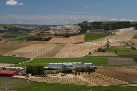 Panóramica de viñedos desde el Castillo de Peñafiel, España