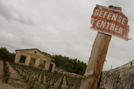 Viñedo en medio de las ruinas de un convento en St-Émilion, Francia