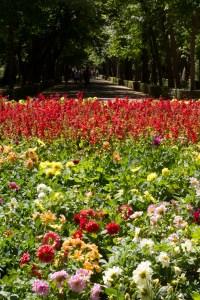 Flores salpicadas de verdor en una de las plazas de los jardines del Príncipe de Aranjuez, España.