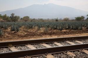 Ferrocarril y plantación de agave, Jalisco, México