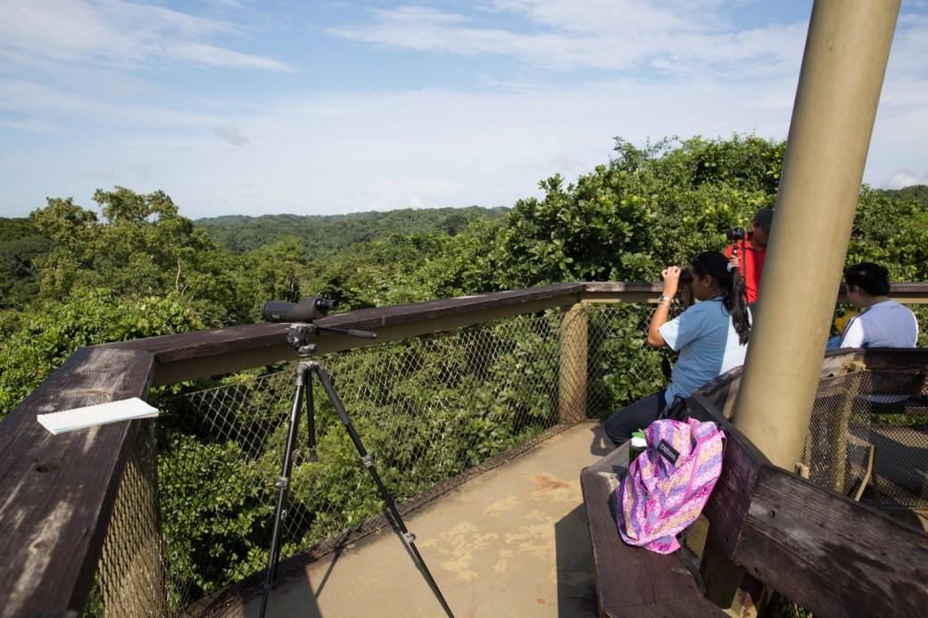 Torre de observación del Panama Rainforest Discovery Center