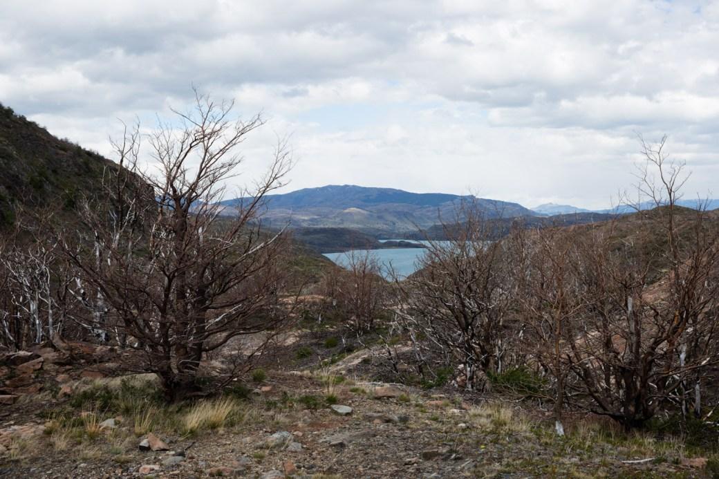 Zona quemada en el incendio de 2011 en Torres del Paine, Chile