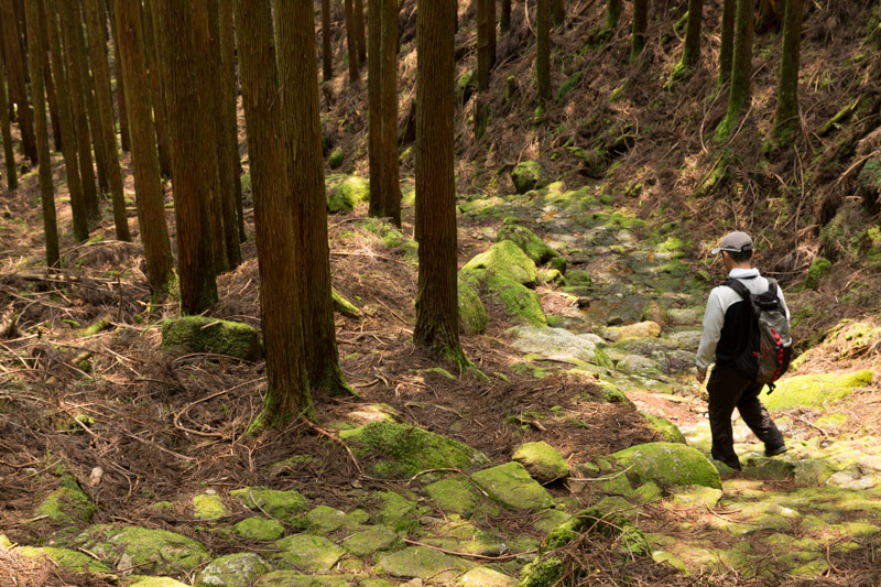 Excursionista en el sendero Ogumotori-goe, Kumano Kodo, Japón