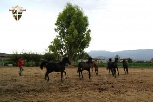 Il Responsabile Nazionale Coordinamento Ippovie dell'ENGEA in visita ai cavalli della Razza Governativa Persano