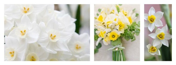 Collage Narcisos