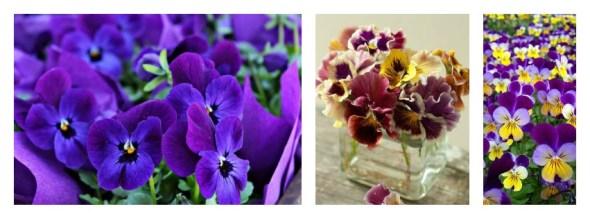 Collage Violetas