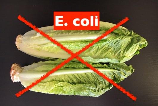 Lettuce-ecoli