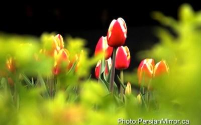 بهارِ گرم کانادا پُشت دَر است؟