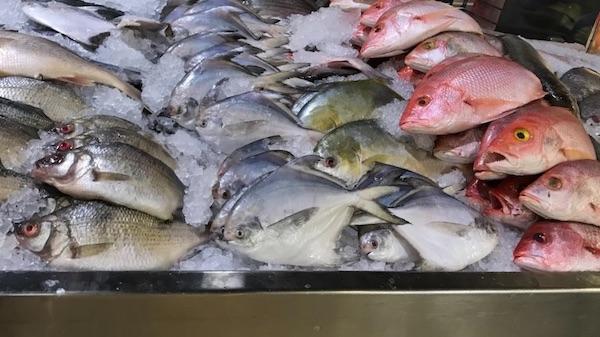 فروش ماهی تقلبی در کانادا