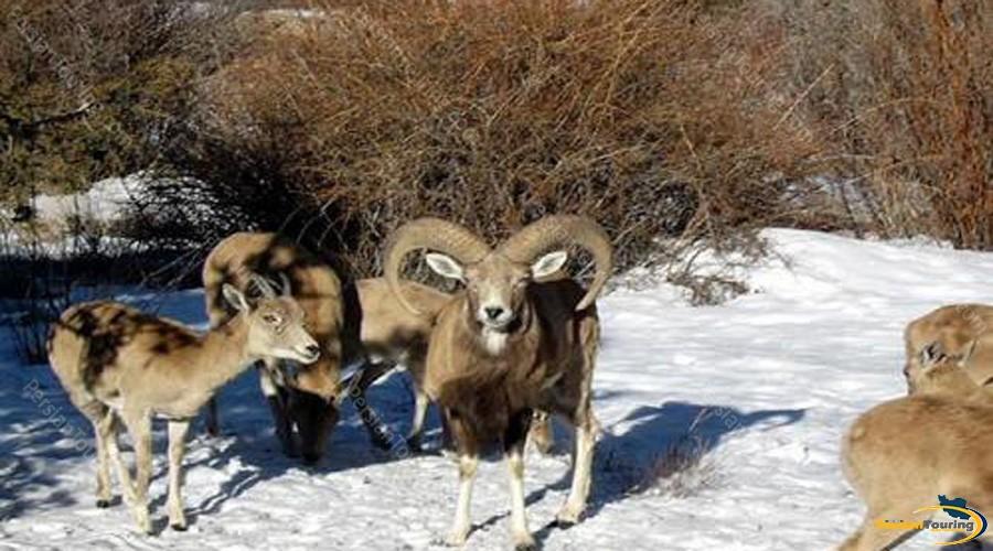 khojir-and-sorkhe-hesar-national-park-2