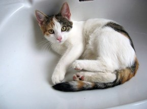 Cat in clogged bathroom sink from Pixabay