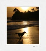 Butterfly Beach Dog �Gary Hayes 2005