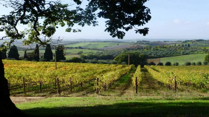 Orcia Wine Festival: dal 25 aprile si celebra la Francigena di Vino