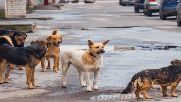 Animali. 700 chili di pet food e farmaci per i randagi