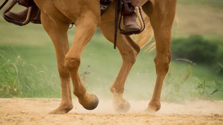 Come aiutare la salute articolare del proprio cavallo in maniera naturale