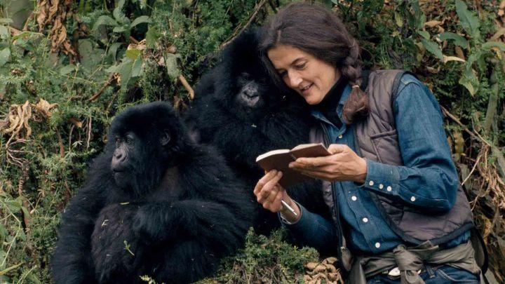 Dian Fossey, tutto per i gorilla
