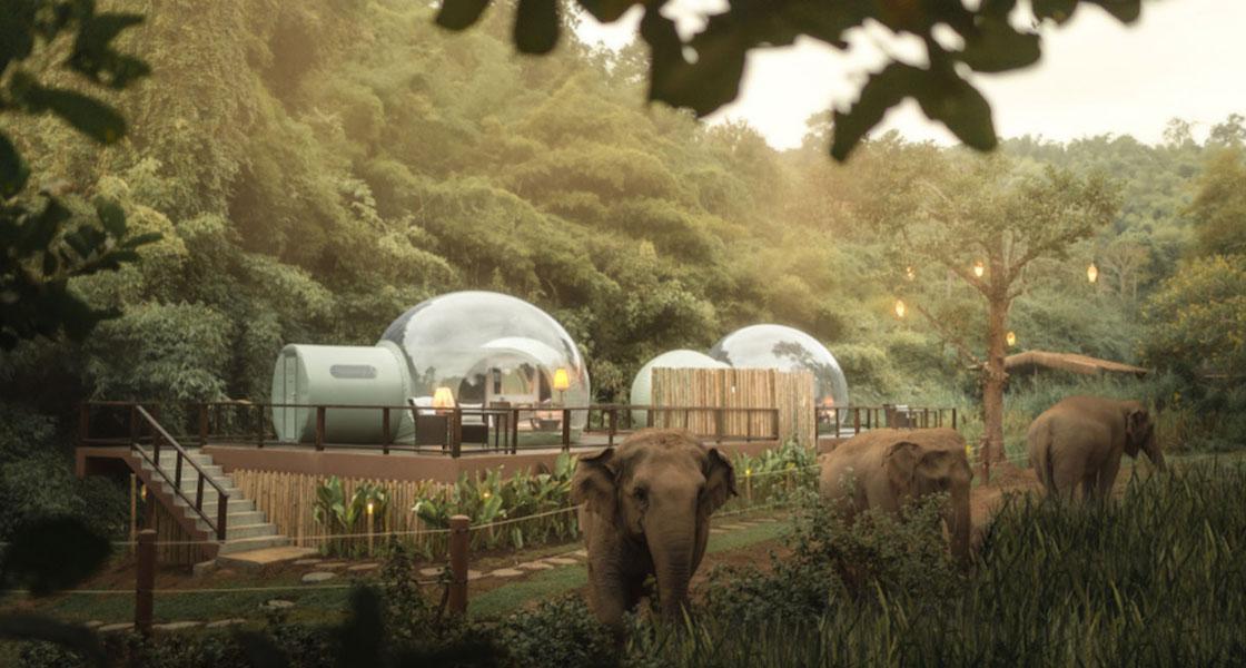 Esiste un luogo incantato immerso nella giungla dove si può dormire con gli Elefanti