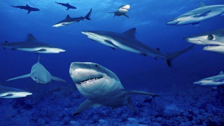 Isola Lampione in Italia: popolata solo dagli squali