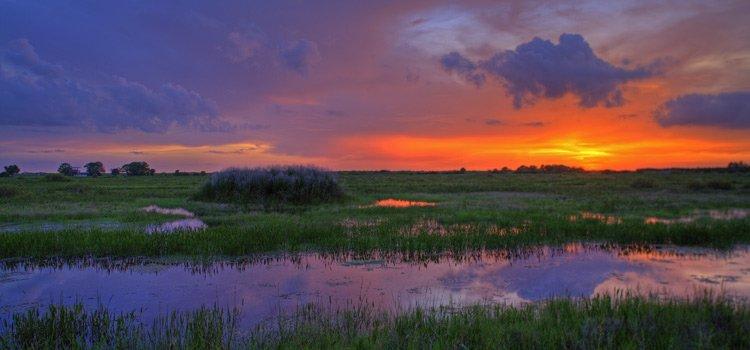 In viaggio tra i parchi: Parco delle Everglades