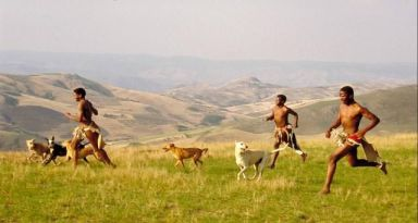 Zulu_Tribesmen_hunting_with_their_dogs_1953_africanisCoZa