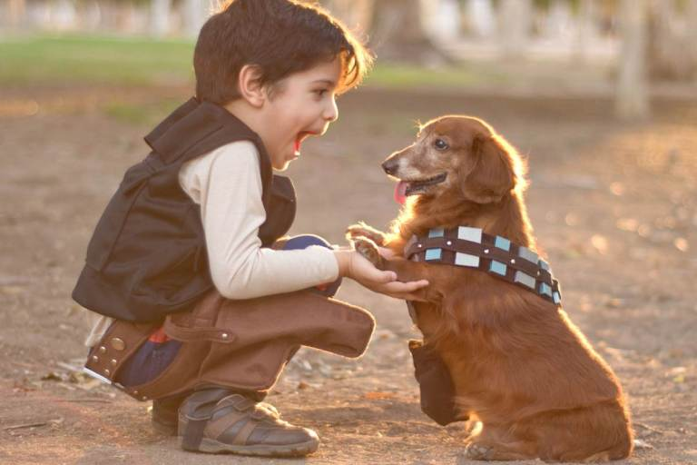 Part One – Keeping Children Safe Around Dogs – The Facts