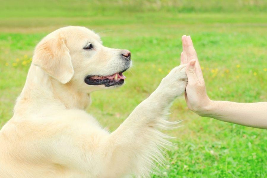 Party Tricks_St. Louis Dog Training