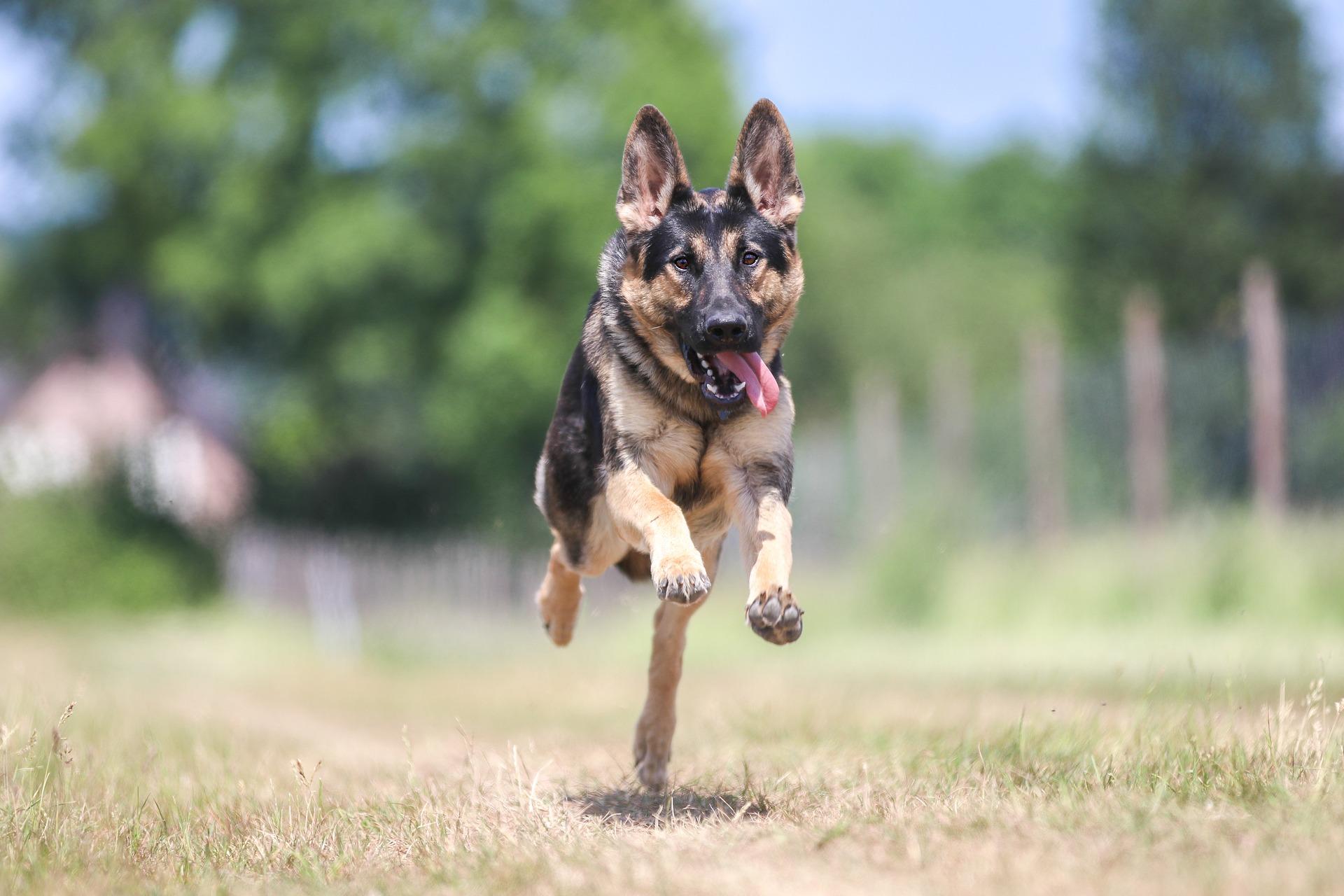 Rockin' Recalls St. Louis Dog Training