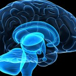 Cerveau du psychopathe et du pervers narcissique