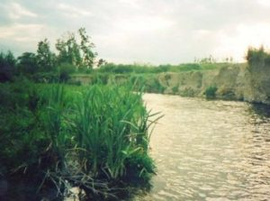 sponda fiume tordino