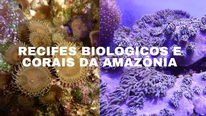 Recifes Biológicos – Inscrições abertas