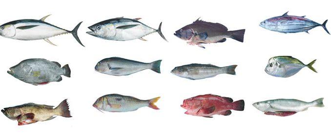 nombres de peces e imagenes