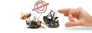 about pest control