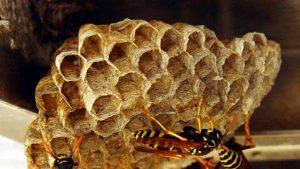 wasp control swindon