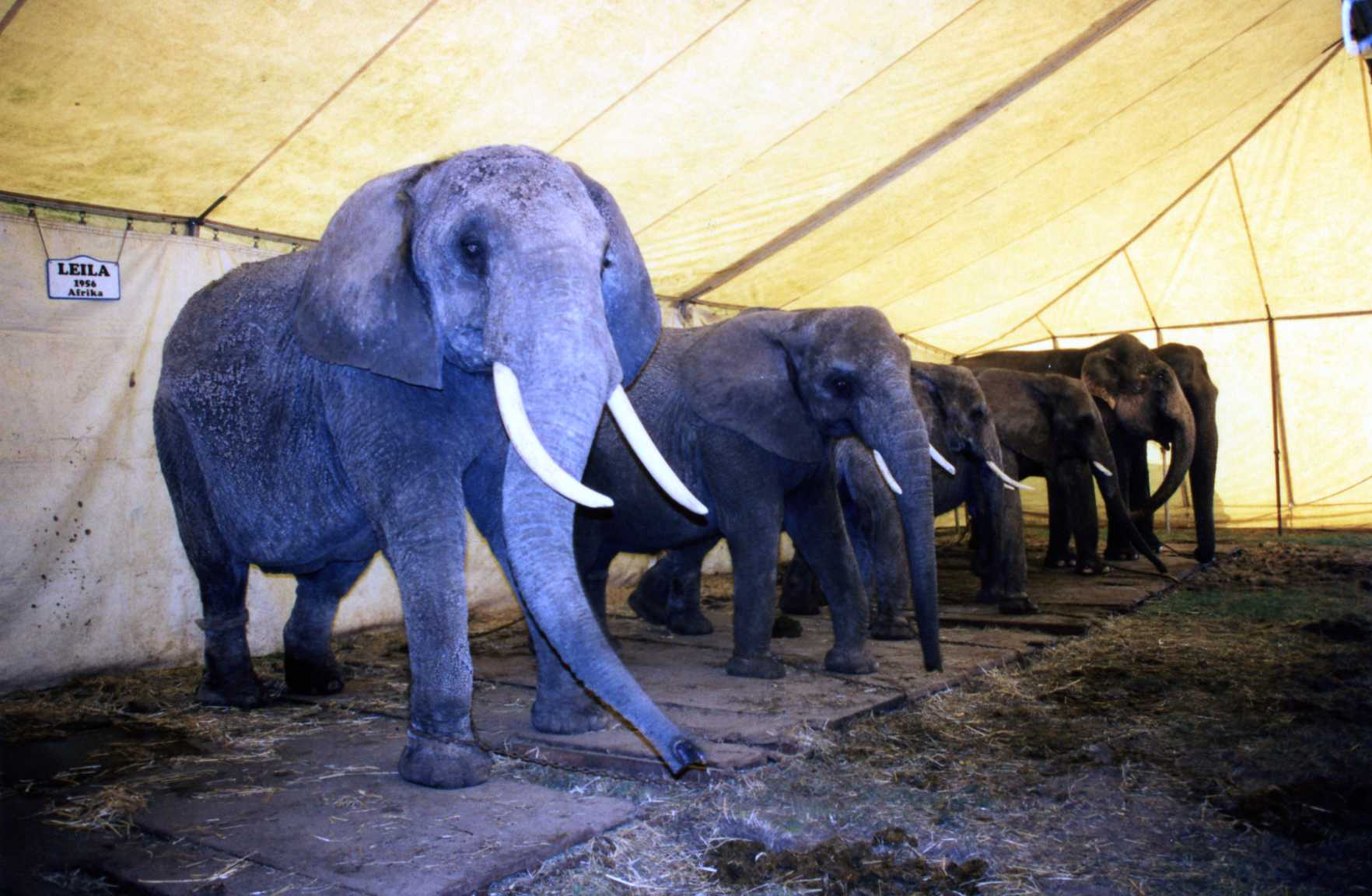 10 Reasons Not To Attend An Animal Circus