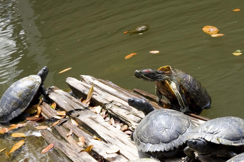 Happy Turtles (2)