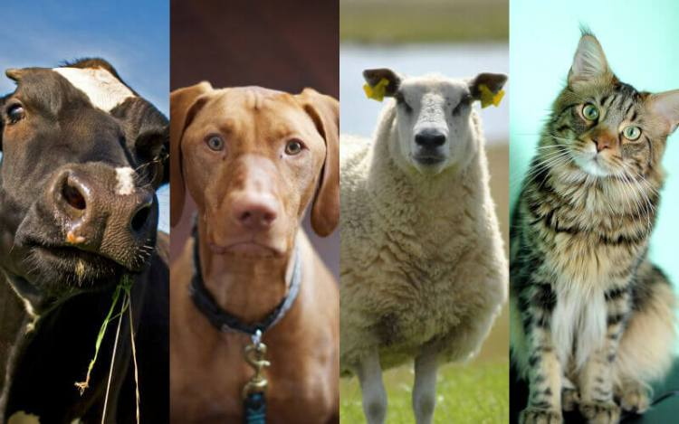 Animals Used for Leather