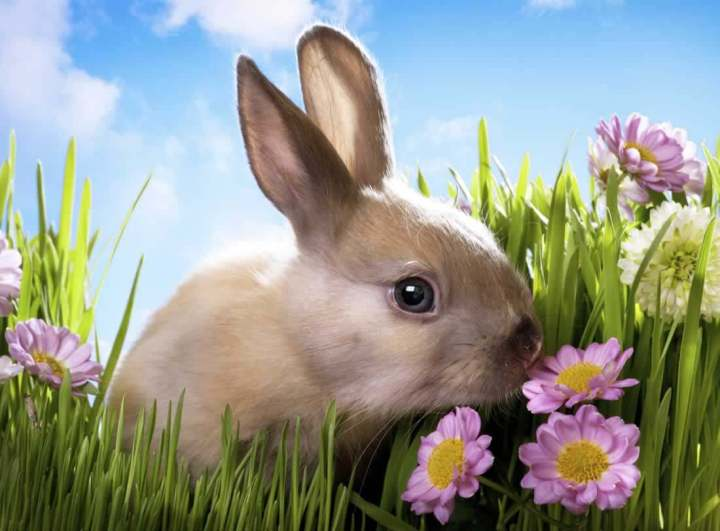 these 15 foods could harm or kill your rabbit | peta