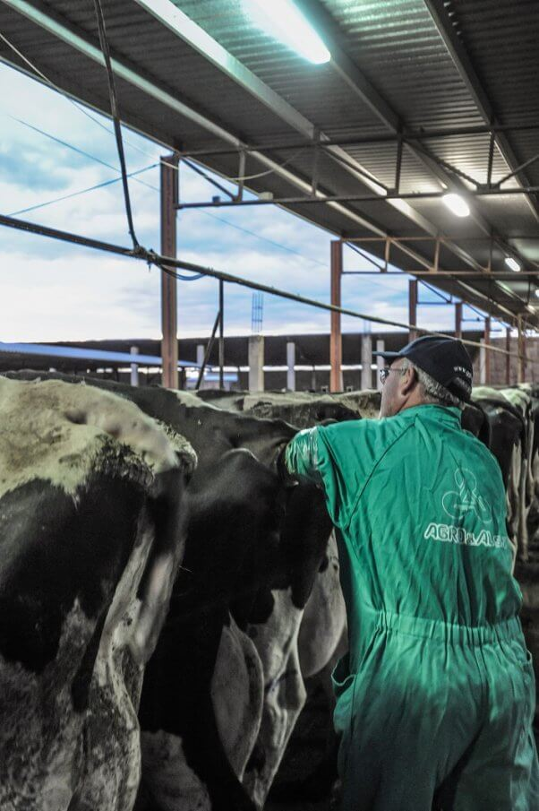 Jo-Anne McArthur, spain, dairy and veal farm, cows, artificial insemination