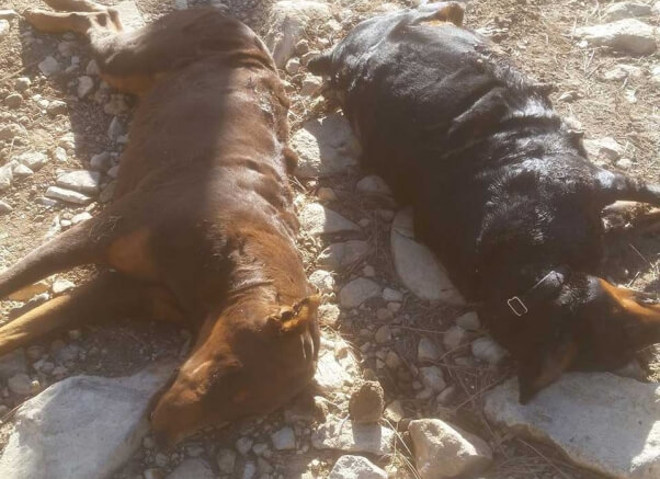 two dogs in capitan, new mexico, were dragged to their deaths