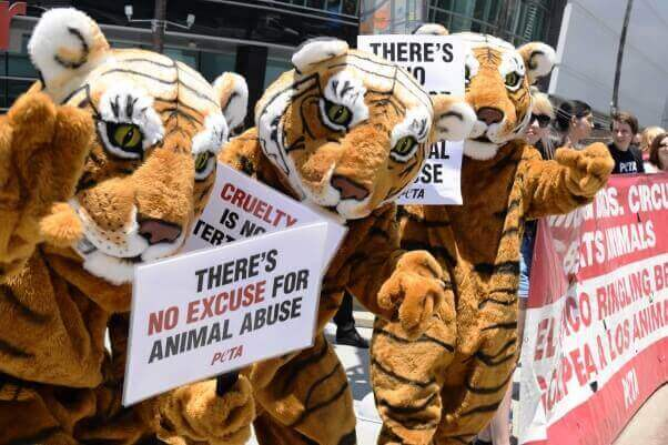 VIDEO: A Lion, a Little Girl, and a Tragedy—Using Animals in Circuses Must End