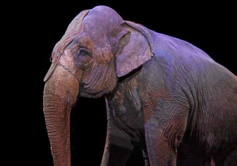 elephant-1412307