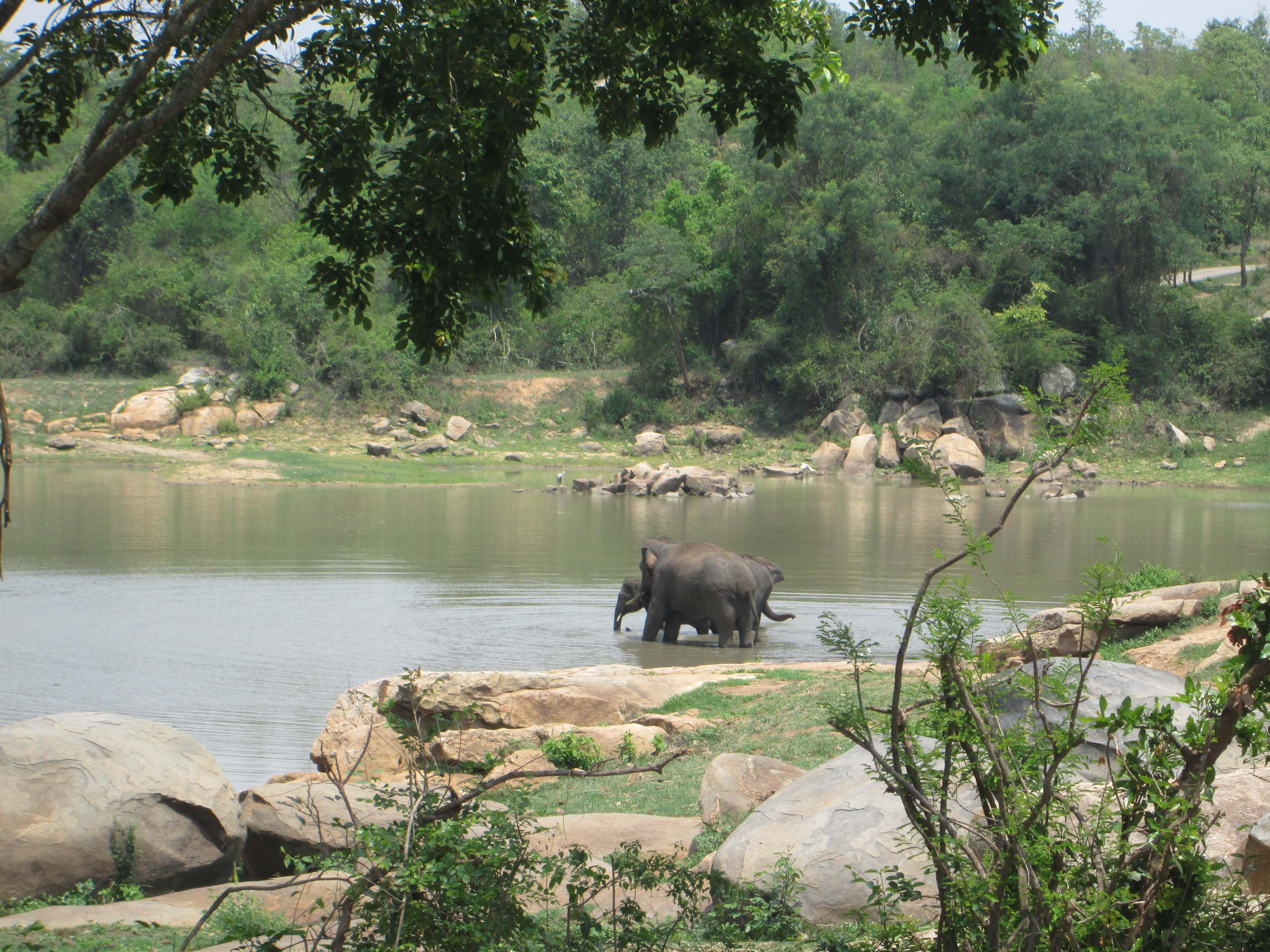 elephant-care-centre-sunder