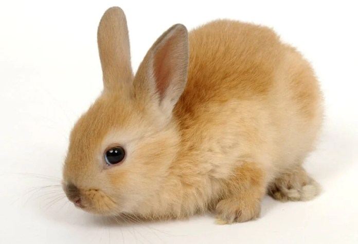 9 Reasons Why You Shouldn't Buy a Bunny | Save Animals | PETA Kids