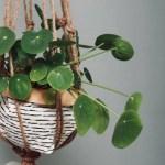 22 Best Indoor Hanging Plants Top Nurturing Tips Petal Republic