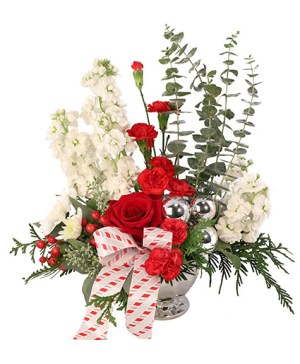 Candy Cane Carnations Flowers